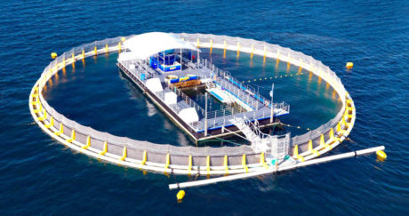 Port Lincoln tuna farm - Air Safaris International